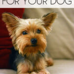 Indoor Boredom Buster Activities For Your Dog
