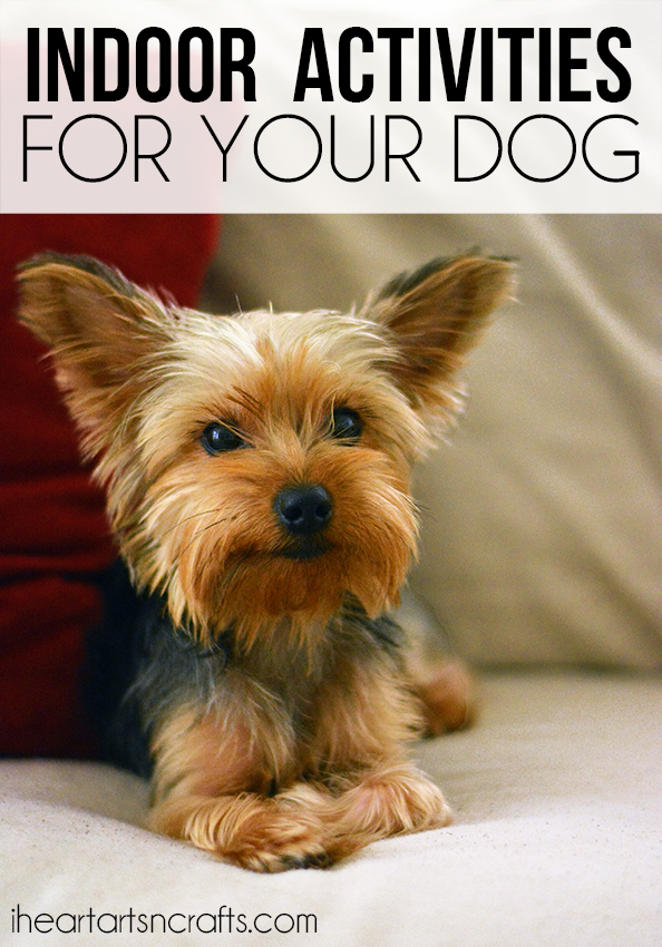 Indoor Boredom Buster Activities For Your Dog I Heart Arts N Crafts