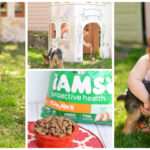 IAMS® Visible Differences Challenge