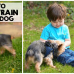 Tips To House Train Every Dog